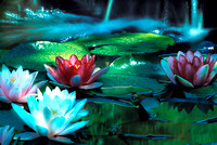 f92-Water-Lilies